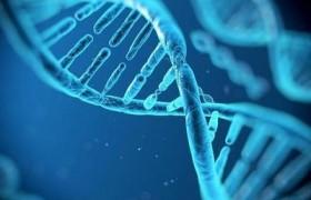 神秘蛋白质可使人类DNA形态演变成不同结构